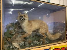 A VERY LARGE GLASS CASED FOX AND PARTRIDGE TAXIDERMY 67CM X 104CM