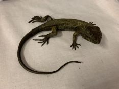 A COLD PAINTED BRONZE FIGURE OF A LIZARD