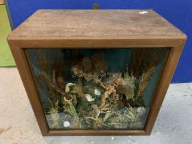 A CASED AMERICAN FREAK SHOW WITH MERMAID, SHELLS AND SEAHORSES