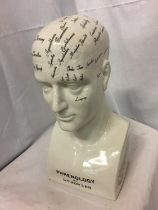 A LARGE REPRODUCTION 'PHRENOLOGY BY L N FOWLER' HEAD, H-41CM