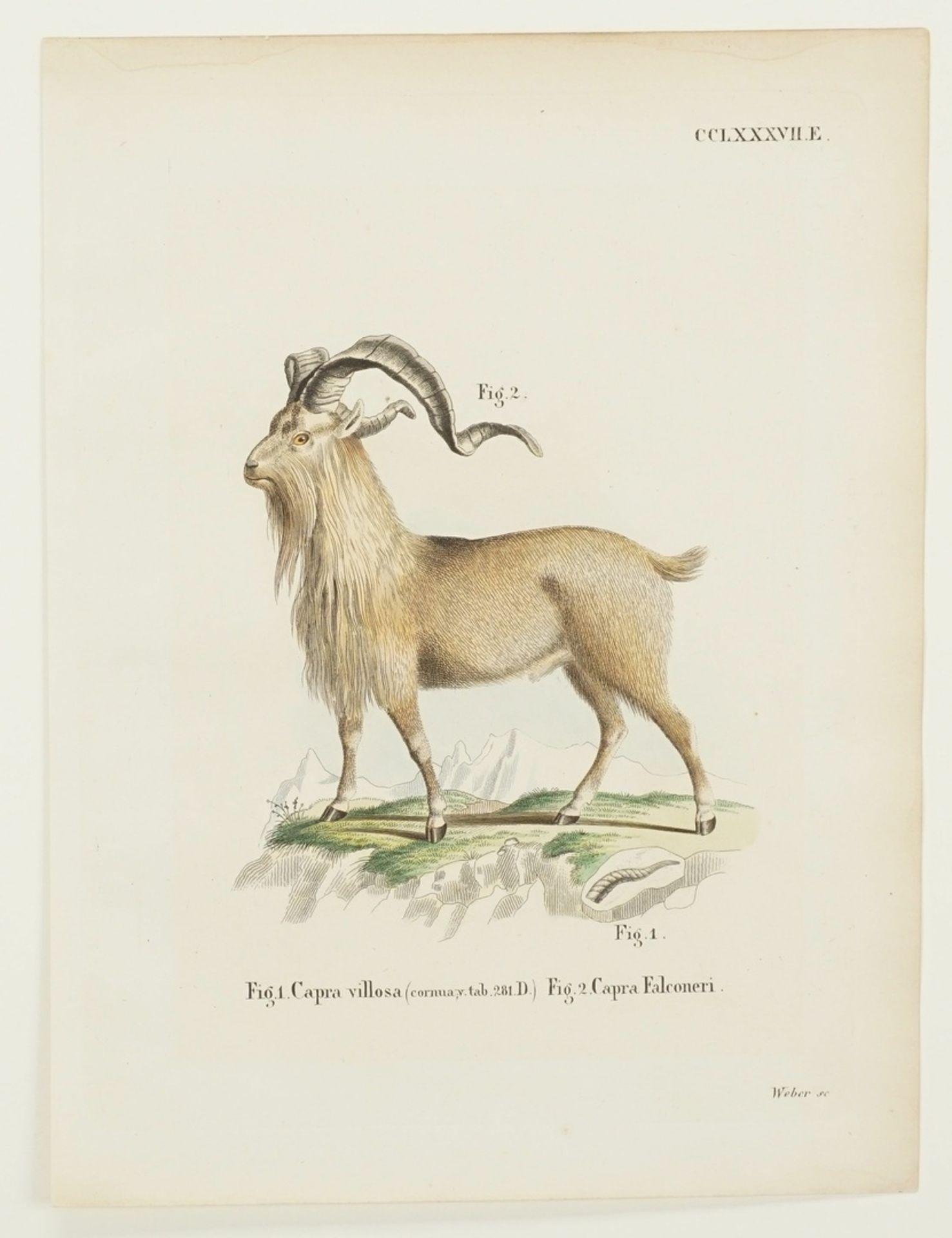 Drei Darstellungen von Ziegen - Bild 2 aus 4