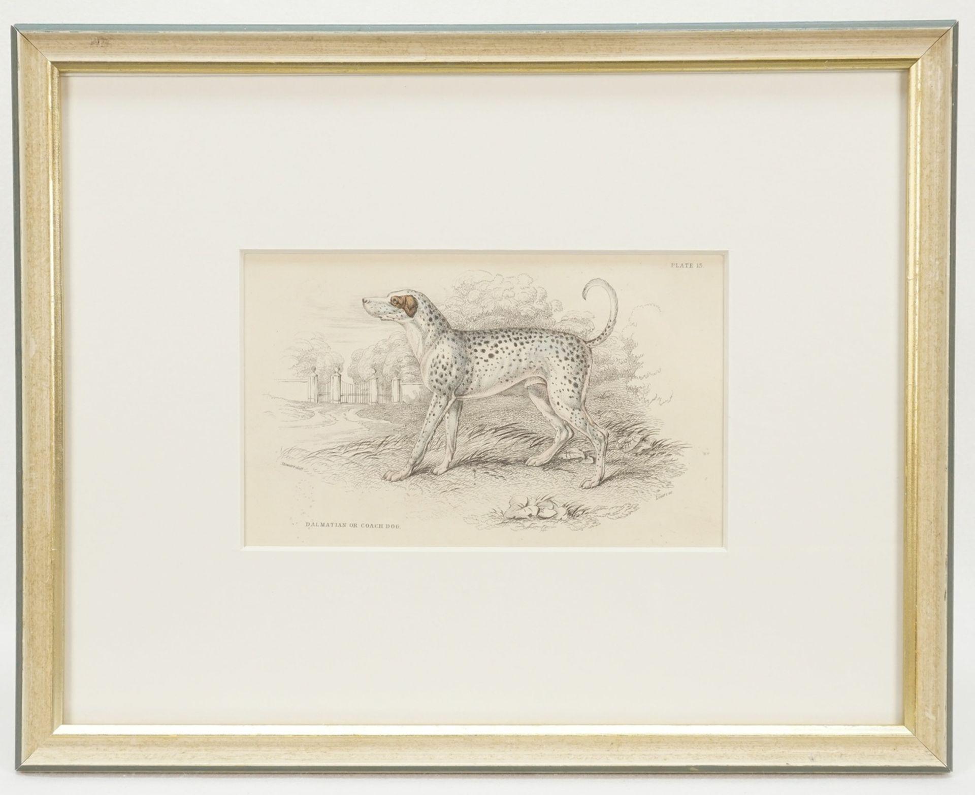 "William Home Lizars, ""Dalmatian or Coach Dog"" - Bild 2 aus 2"