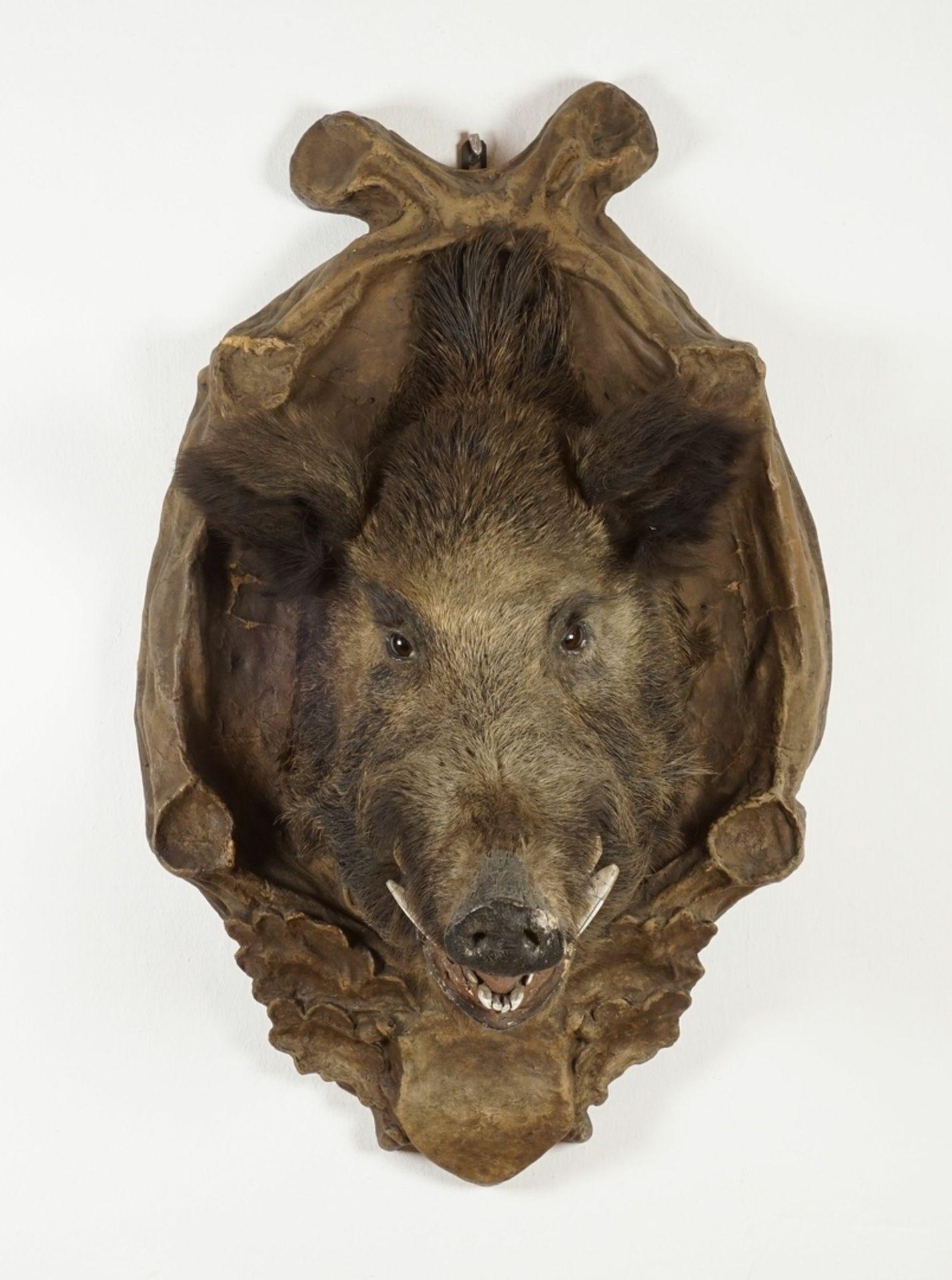 Wildschweinkopf vom Welfenschloss Blankenburg - Bild 4 aus 7