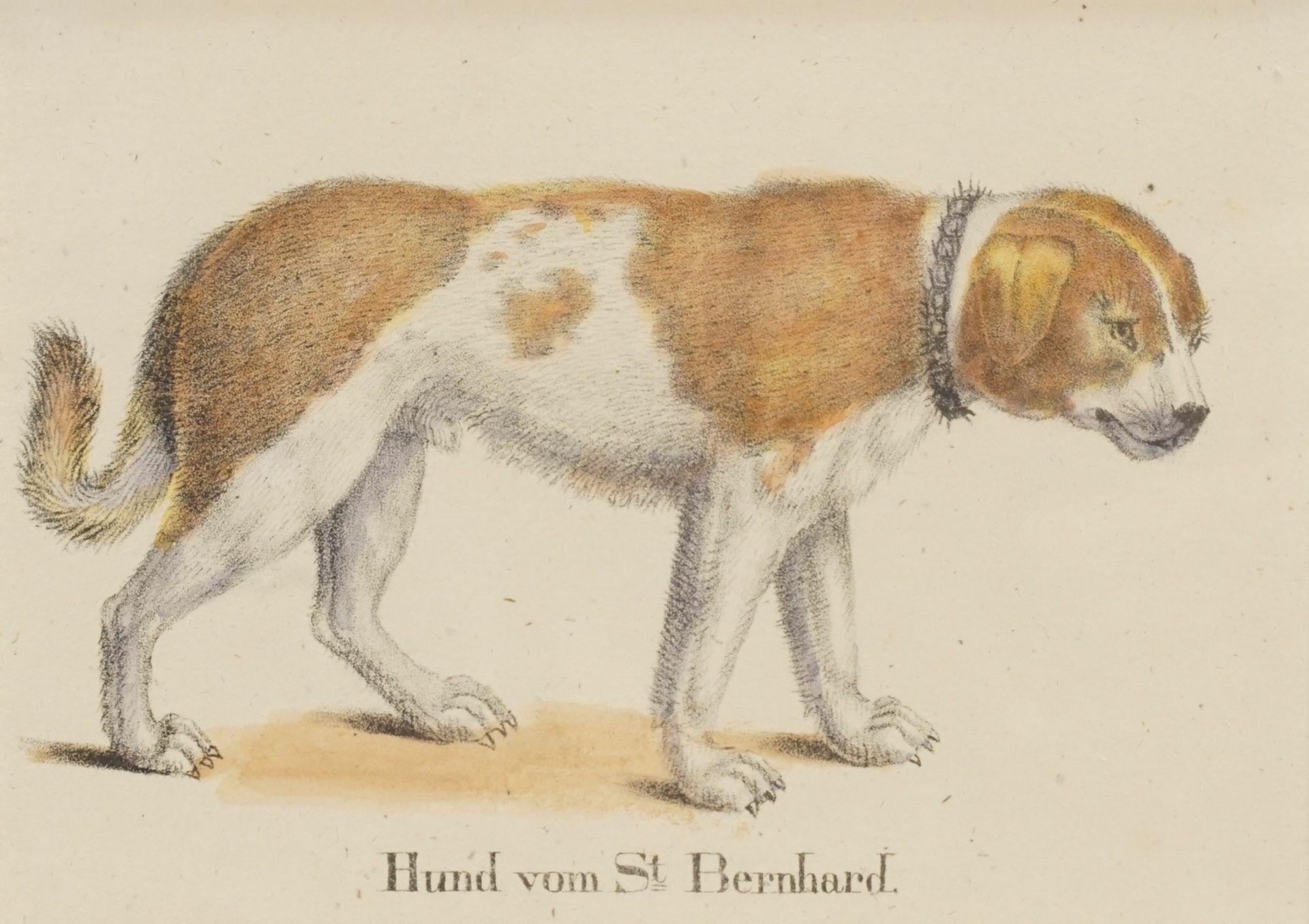 """Unbekannter Künstler, """"Hund von St. Bernhard"""""""