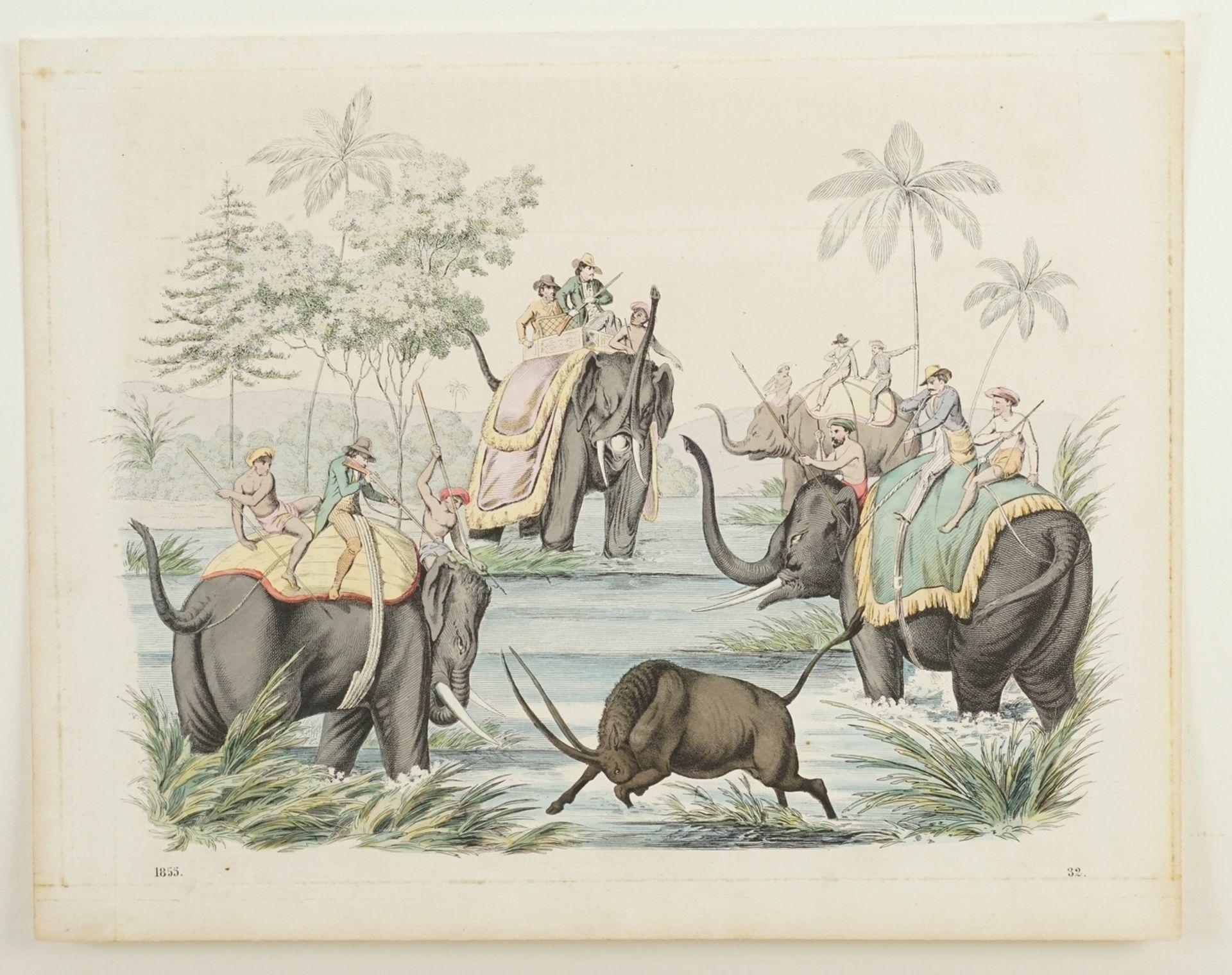 Jagd mit Elefanten in Indien - Bild 3 aus 3