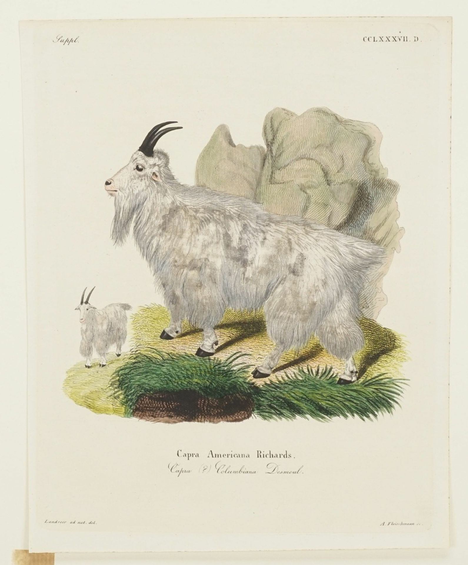 Drei Darstellungen von Ziegen - Bild 4 aus 4