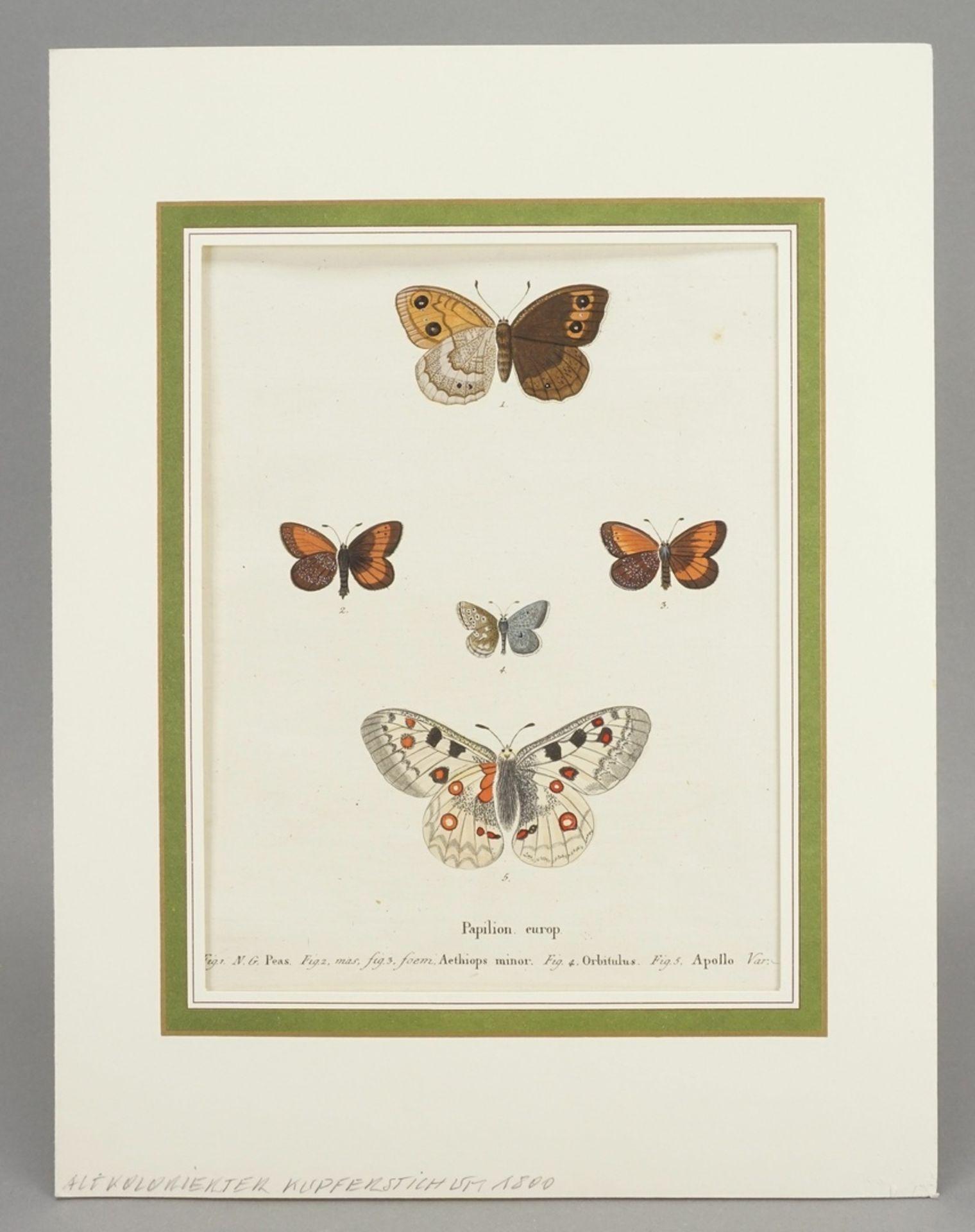 """Johann Friedrich Volkart, Naturkundliches Blatt, """"Papilion. europ. (Europäische Schmetterlinge)"""" - Bild 2 aus 3"""
