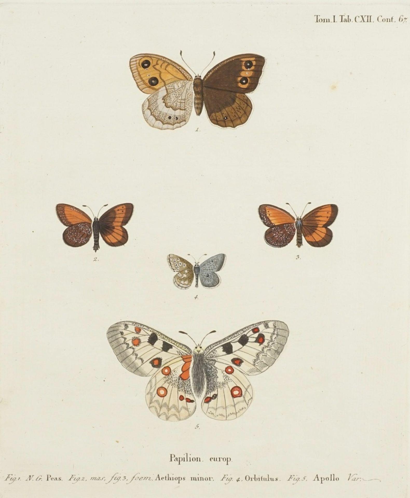 """Johann Friedrich Volkart, Naturkundliches Blatt, """"Papilion. europ. (Europäische Schmetterlinge)"""""""