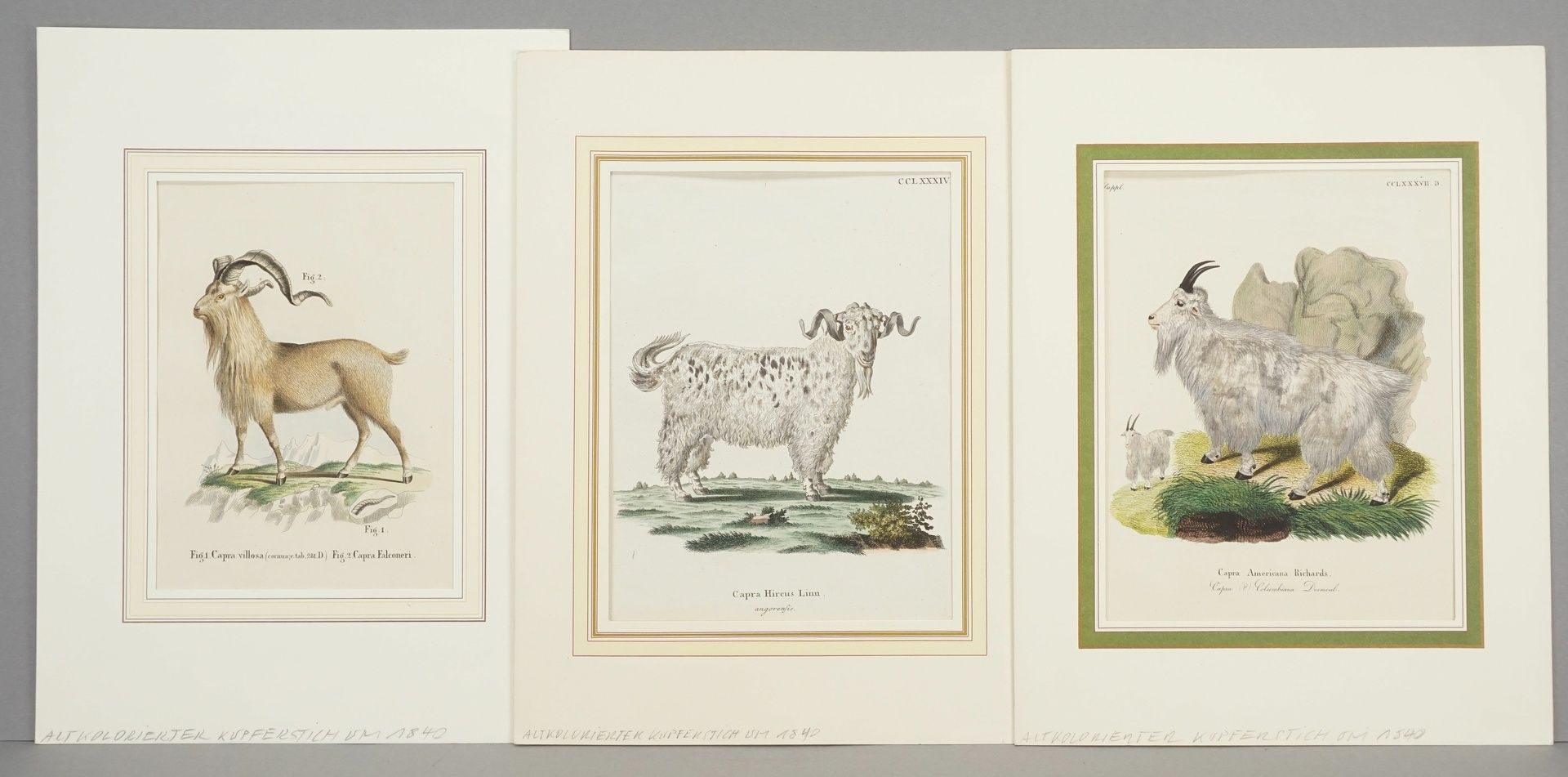 Drei Darstellungen von Ziegen