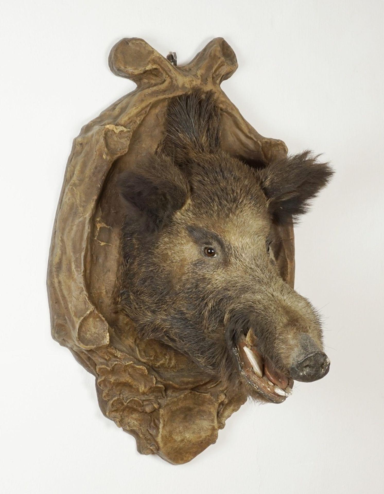 Wildschweinkopf vom Welfenschloss Blankenburg