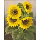 """Walter Richter, """"Sonnenblumen"""""""