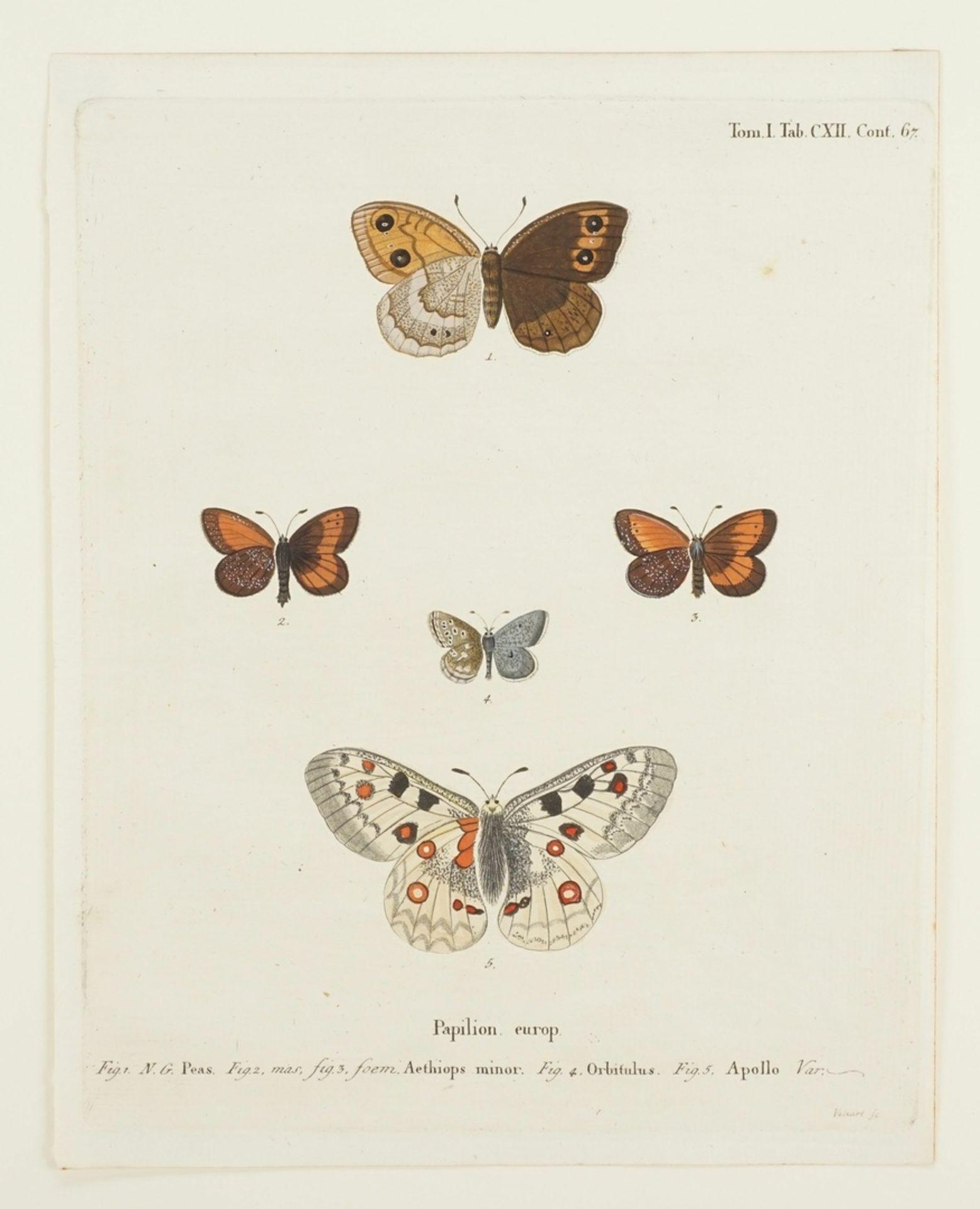 """Johann Friedrich Volkart, Naturkundliches Blatt, """"Papilion. europ. (Europäische Schmetterlinge)"""" - Bild 3 aus 3"""