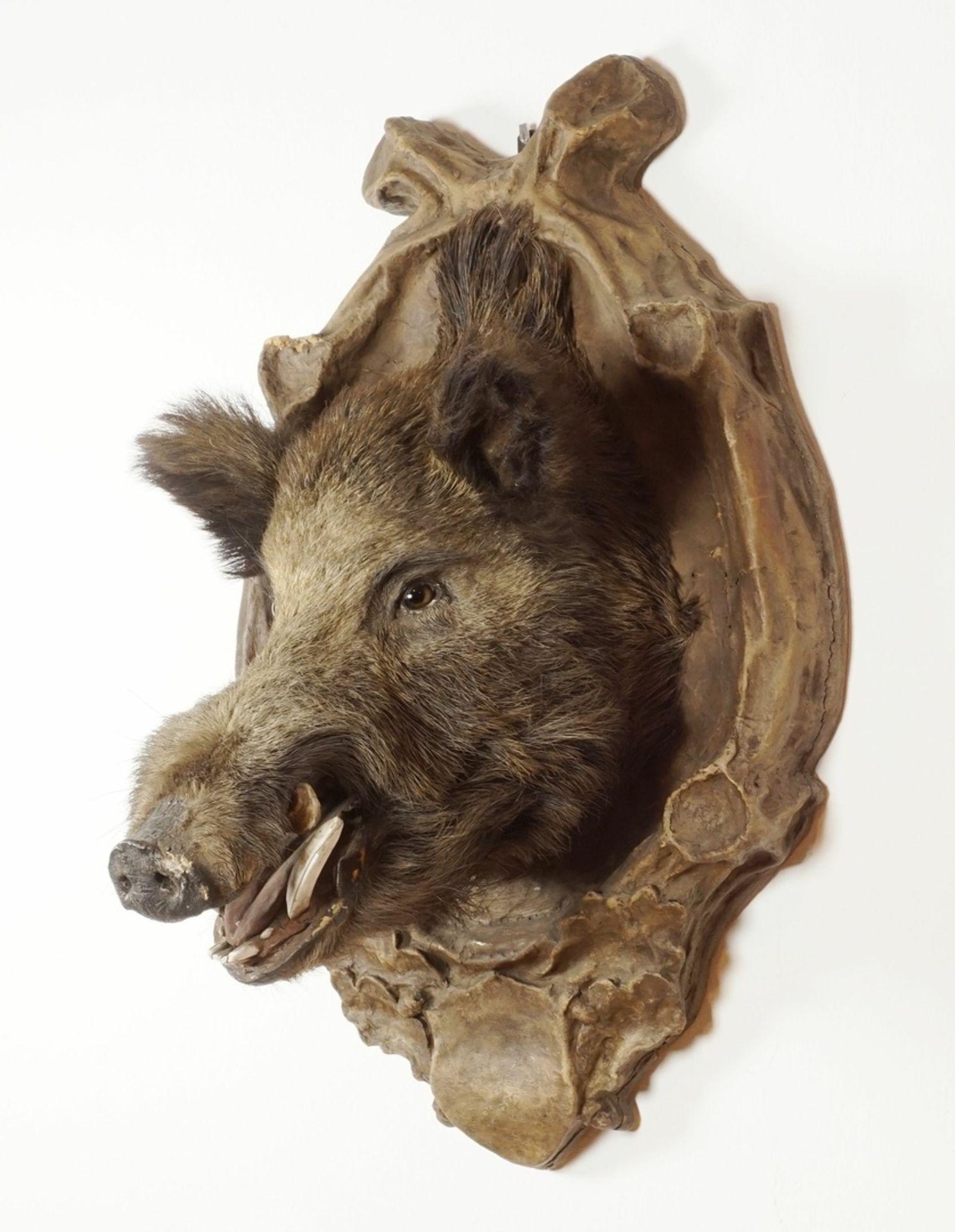 Wildschweinkopf vom Welfenschloss Blankenburg - Bild 2 aus 7