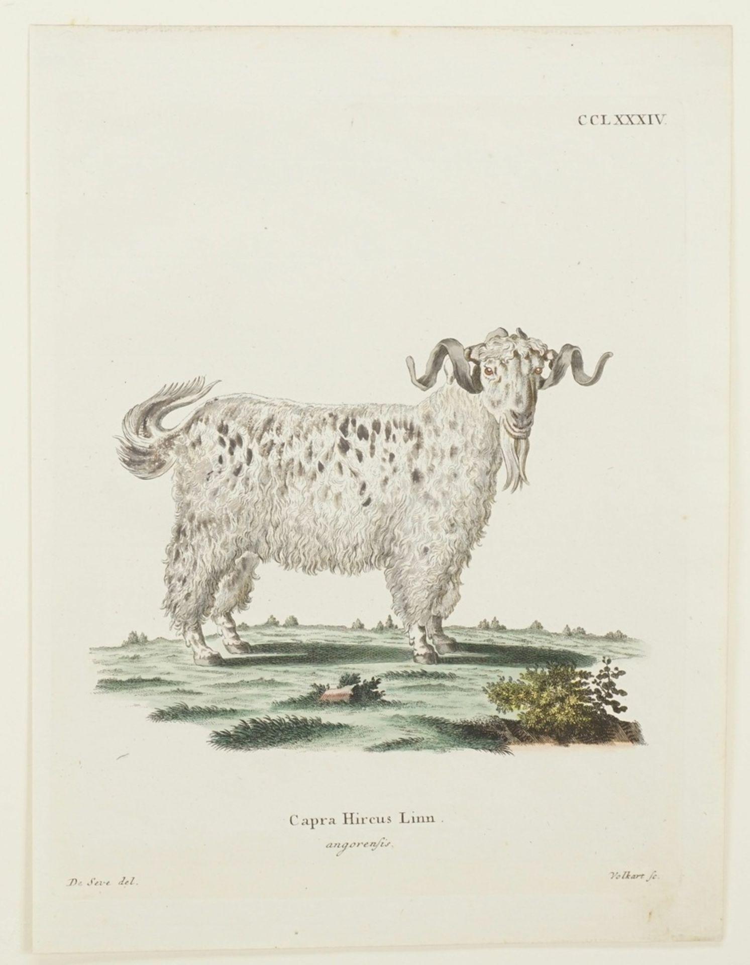 Drei Darstellungen von Ziegen - Bild 3 aus 4