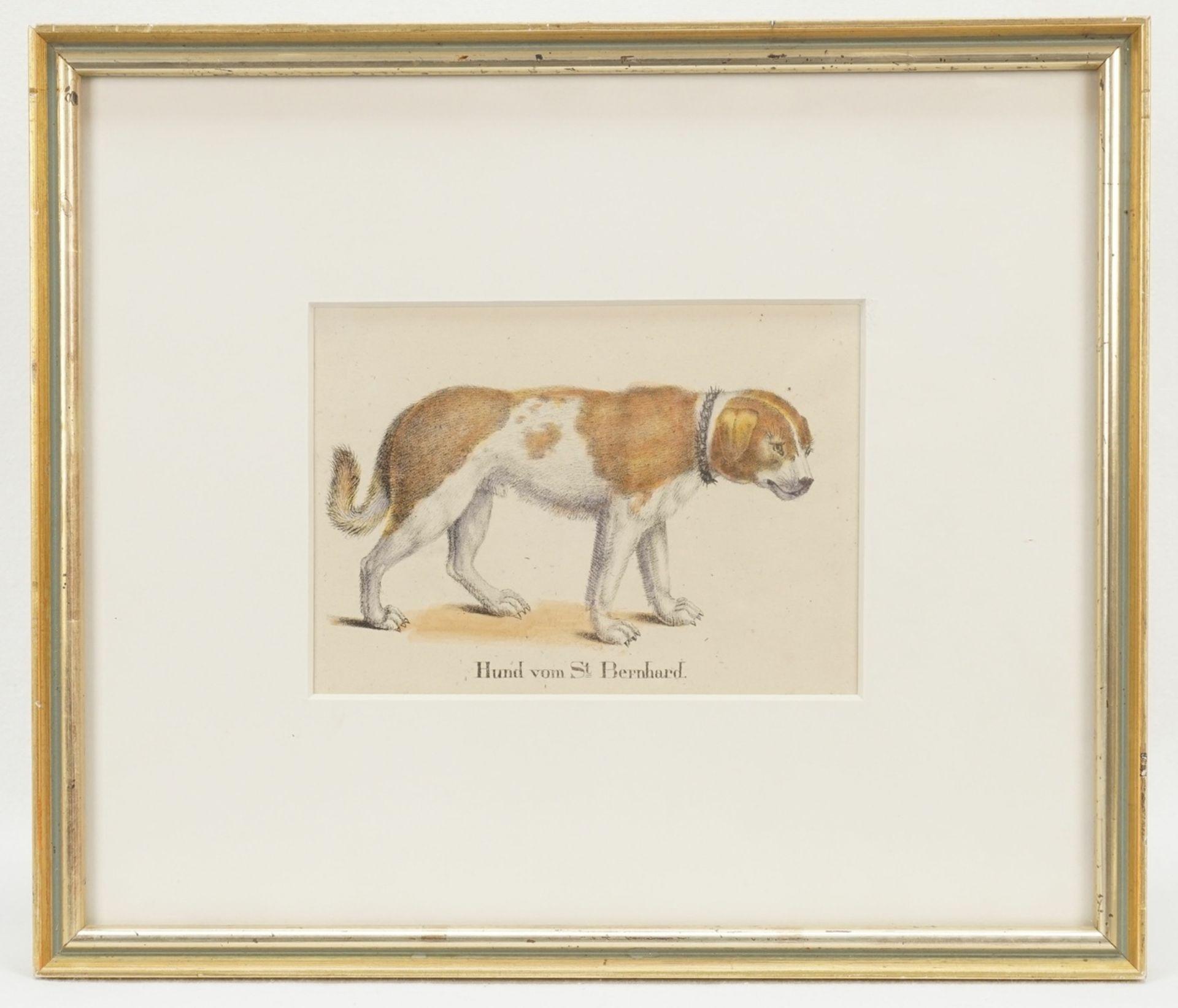 """Unbekannter Künstler, """"Hund von St. Bernhard"""" - Bild 2 aus 2"""