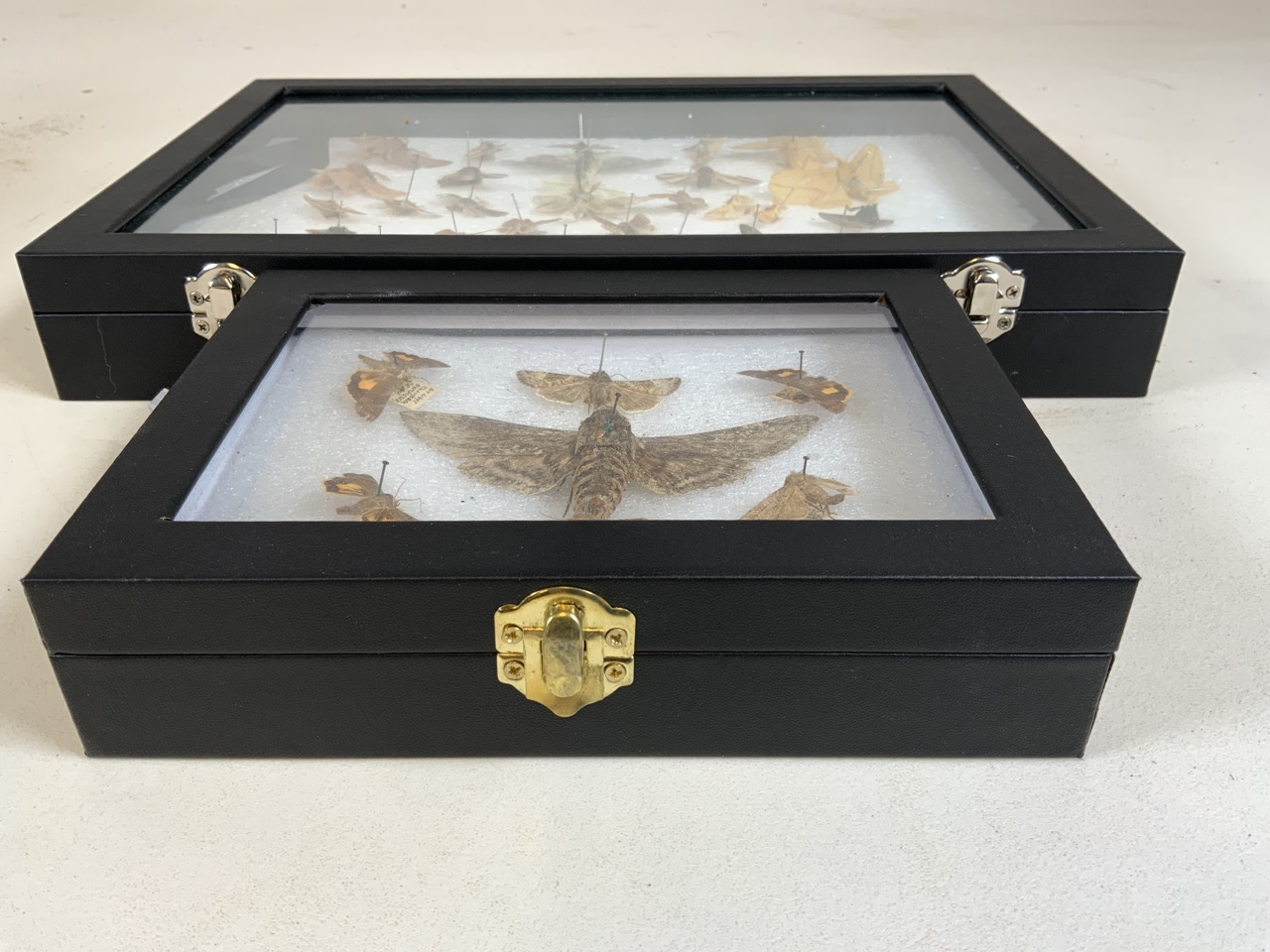 Two cases of Devon moths including a death head moth. W:24cm x D:35cm - Image 4 of 4