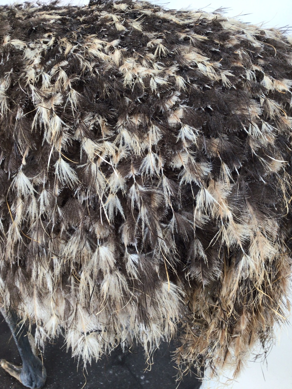 An early 20th century taxidermy full size emu on board. W:67cm x D:40cm x H:90cm - Image 4 of 9