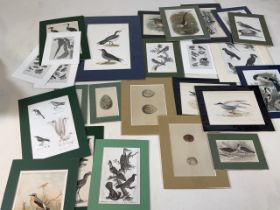 A large quantity of bird related prints in modern mounts. Approx W:20cm x H:25cm