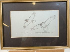 A pencil sketch By Brian Cinter crows attacking the otter. W:27cm x H:15cm
