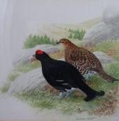 Norman Arlott (1947) Orinthological School Watercolour and gouache highlights Scottish Black Grouse,