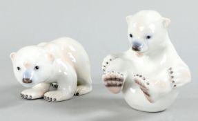 2 junge Eisbären