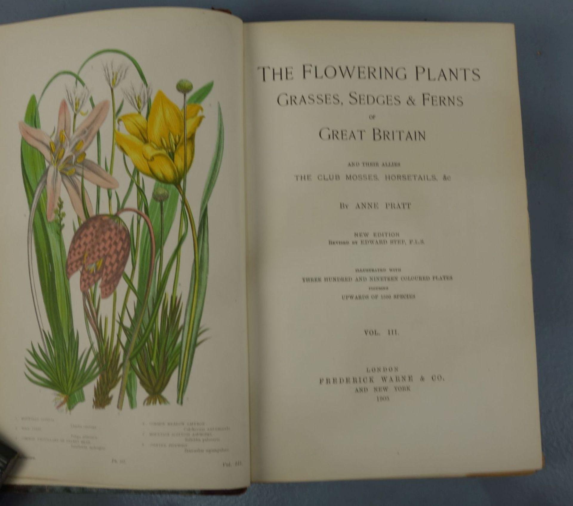 KONVOLUT BÜCHER VON 1899-1905: The Flowering Plants (Bd. 1-3) - Image 3 of 3