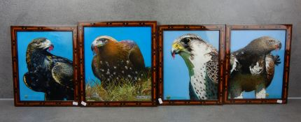 TRÜMPER, FRANZ (Gronau 1941-2021 Enschede NL) - Four paintings with birds of prey