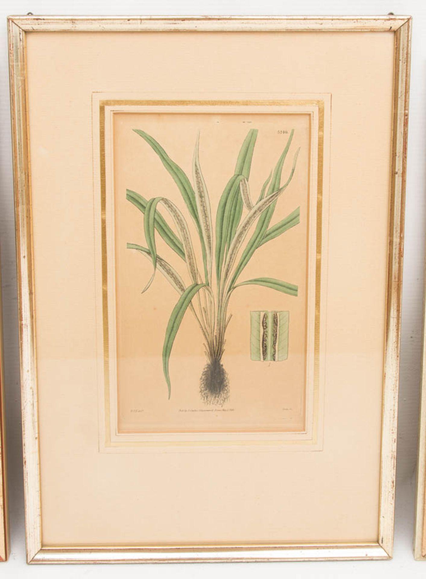 Drei florale Drucke, ein florales Aquarell.Gerahmt, leichte Gebrauchsspuren.Ein Be - Bild 5 aus 6