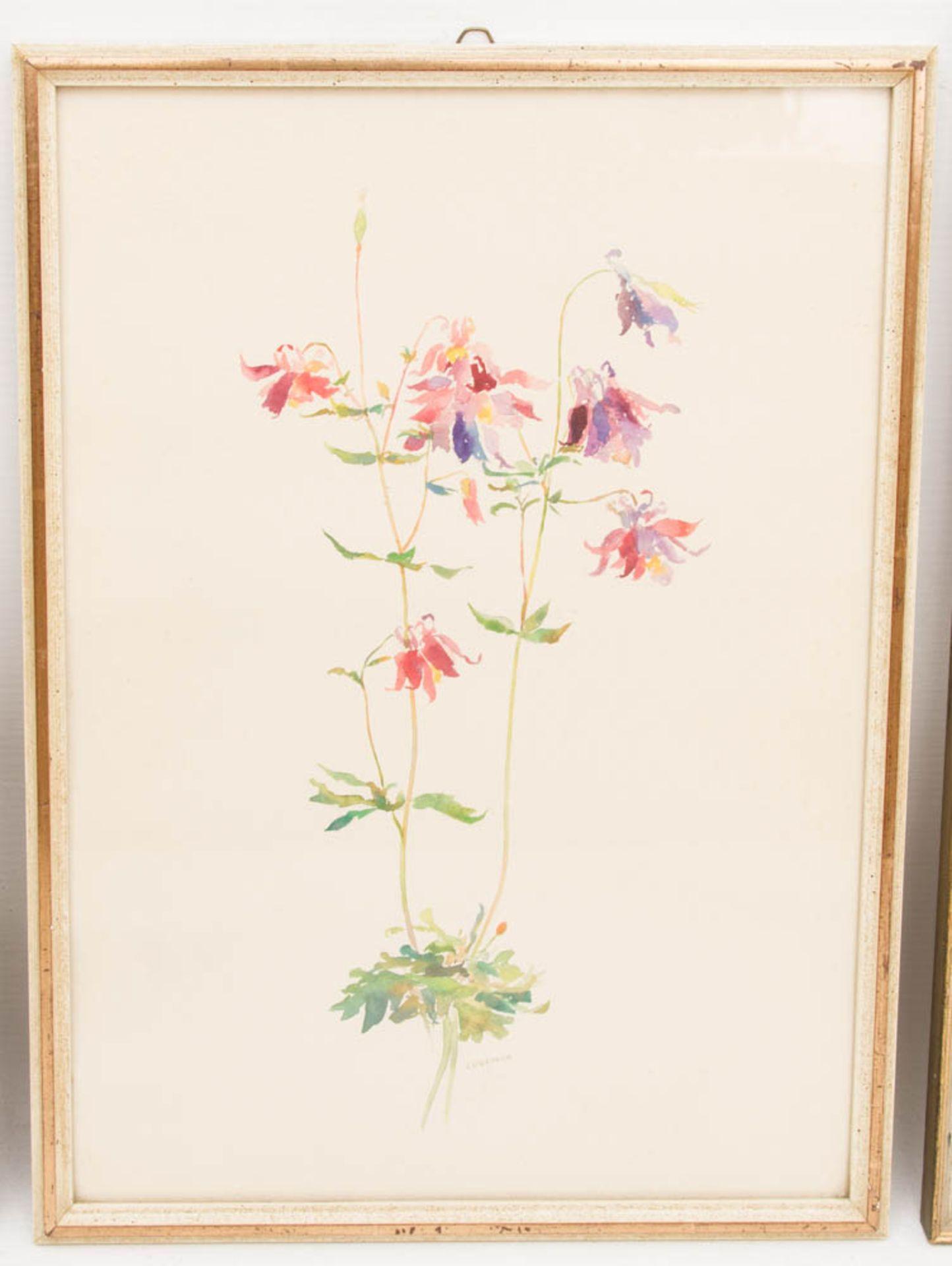 Drei florale Drucke, ein florales Aquarell.Gerahmt, leichte Gebrauchsspuren.Ein Be - Bild 2 aus 6