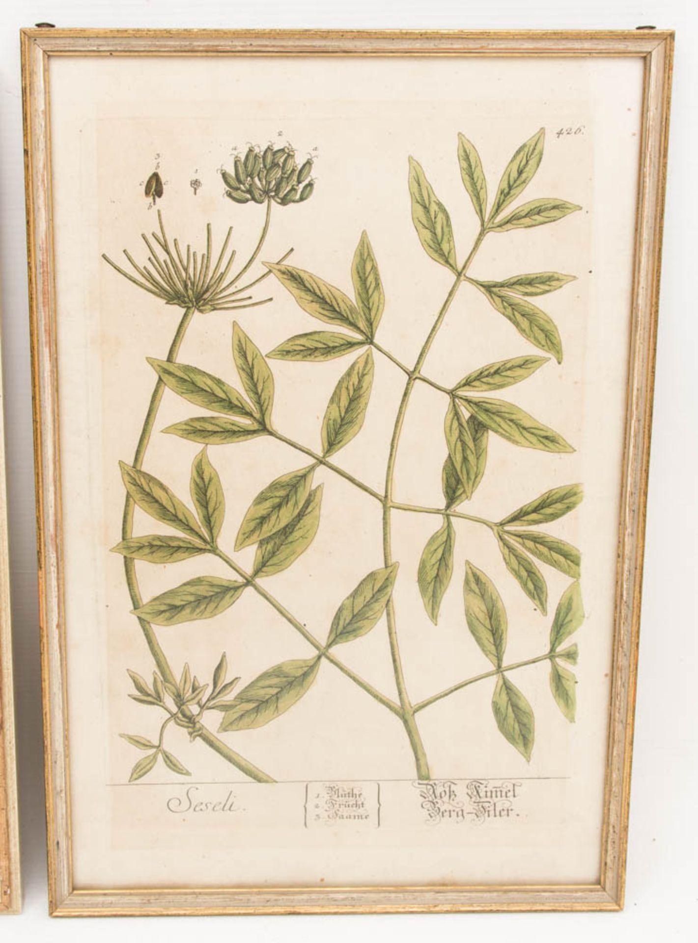 Drei florale Drucke, ein florales Aquarell.Gerahmt, leichte Gebrauchsspuren.Ein Be - Bild 3 aus 6