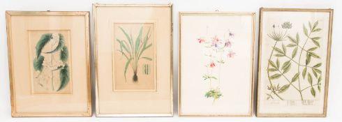 Drei florale Drucke, ein florales Aquarell.