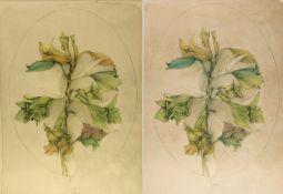 Bruni, Bruno. 1935 GradaraA floral Fantasy. Blumenstrauß aus Amaryllis. 3 Farblithogra