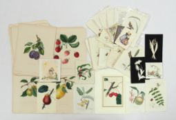 "Konvolut Graphik 19. Jahrhundert ""Pflanzen"""