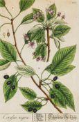 Herbarium Blackwellianum