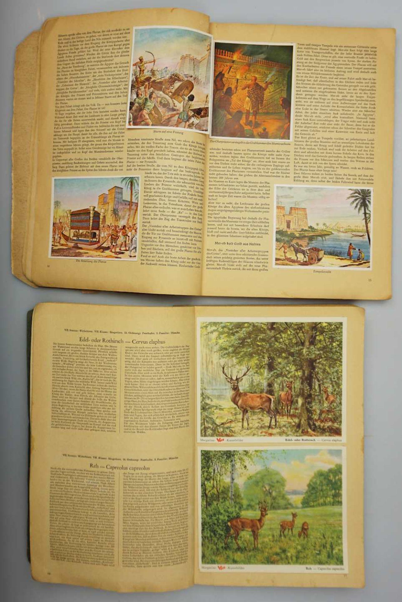 """1 Sammelbilderalbum """"Das Tierreich"""" Band I, VOSS-Kunstbilder, Bielefeld 1951 sowie 1 S - Bild 2 aus 3"""