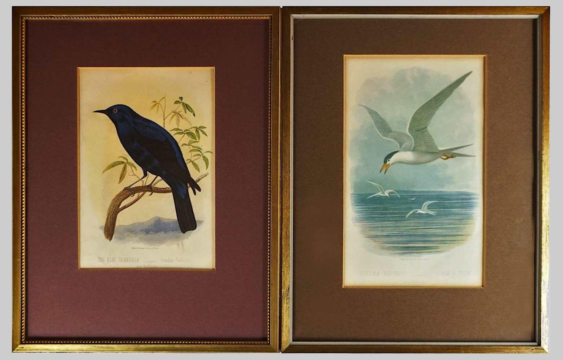 """3 Pendants Graphiken 2. Hälfte 19. Jh.: 2 Farblithographien """"Plate 21, Cassell's Book - Bild 2 aus 3"""
