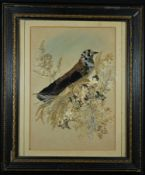 A 19th century ornithological feather picture, of a bird amongst ferns and mosses, 21.5cm x 15cm