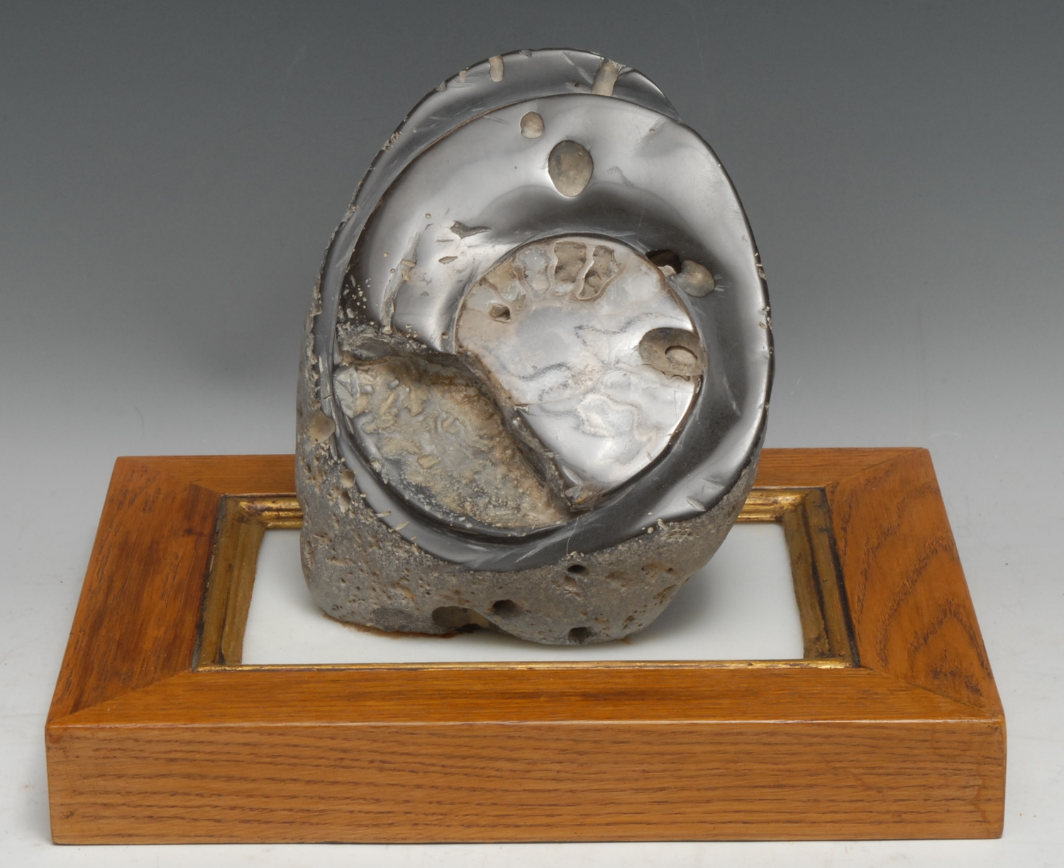 Natural History - Geology, Palaeontology - an ammonite specimen, cut and polished, 15.5cm wide,