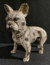 A cold painted bronze model of a French Bull Dog, 10cm, 20th century