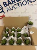 Artificial Mini Succulent in Concrete Pot, Box of 12 RRP £5 Each