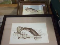 """Jacqueline O""""Malley 2 watercolours of Seals 6 1/2 x 4 1/2 and 5 1/2 x 9 inches"""