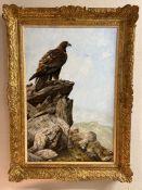 John Trickett (b.1953), gilt framed oil on canvas of Golden Eagle signed bottom left, 50cm x 75cm
