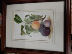 2 Prints of Fruit