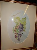 M Russell Watercolour of Grapes 13 x 9 inches