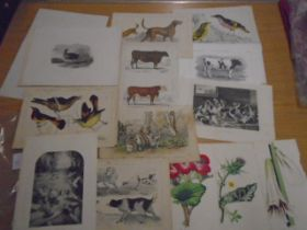 Prints of Animal and birds approx 15