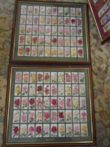 Framed cigarette cards of flowers x2