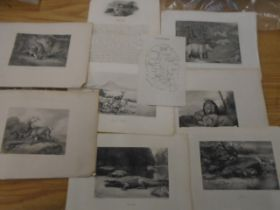 Prints of African wildlife in black and white