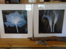 2 prints of flowers