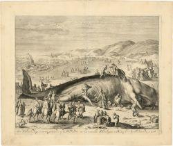 Matham, Jacob - nach: Der gestrandete Walfisch zwischen Scheveningen und Katwy...
