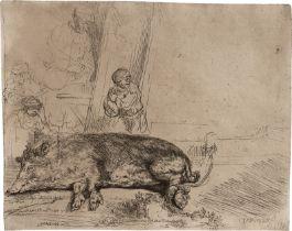 Rembrandt Harmensz. van Rijn: Das schlafende Schwein